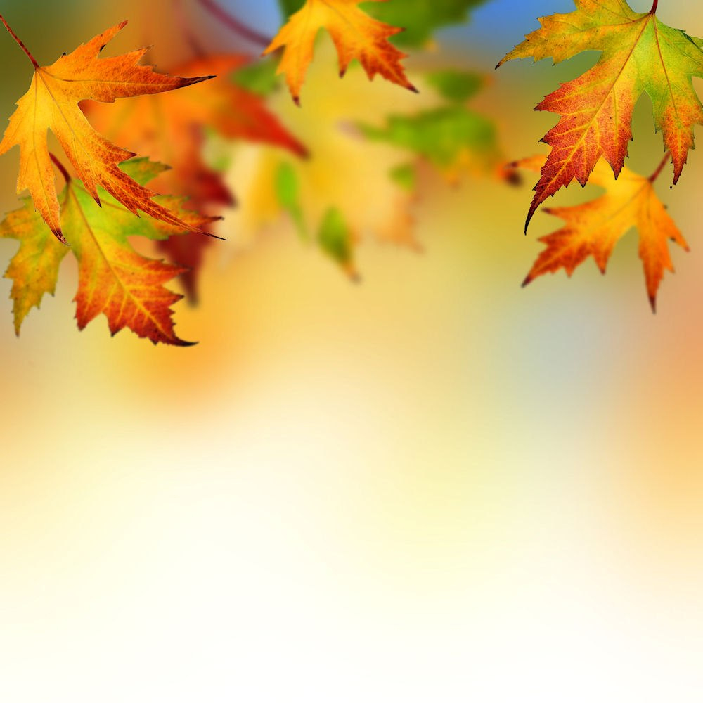 Autumn Leaves Backgrounds For Powerpoint  Flower Ppt Templates With Free Fall Powerpoint Templates