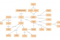 Concept Map Templates And Examples  Lucidchart Blog with Blank Body Map Template