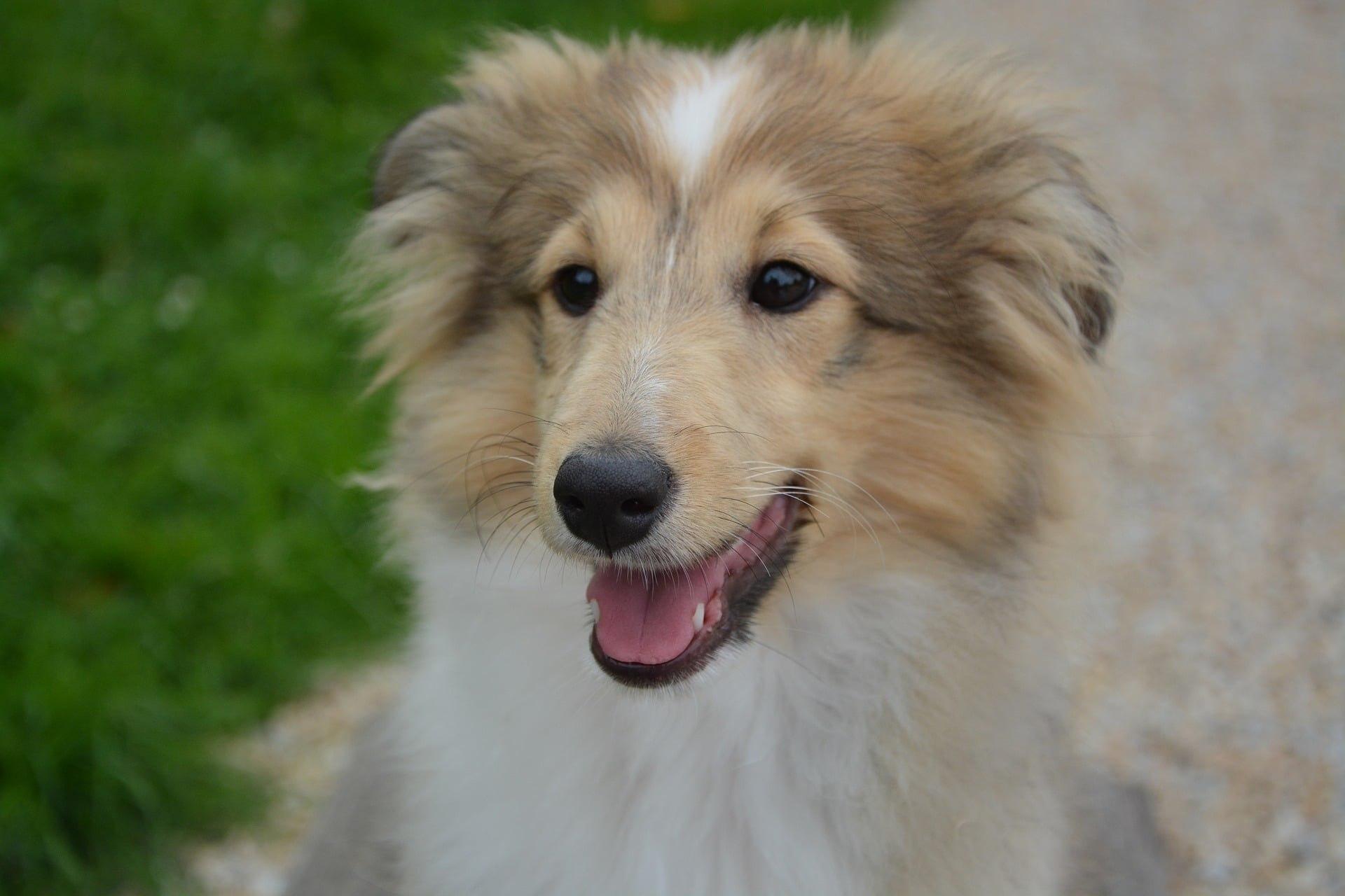 Dog Breeding Business Plan Template  Black Box Business Plans For Dog Breeding Business Plan Template