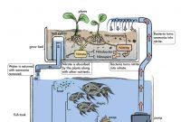 Nadika Aquaponic Business Plan Template inside Aquaponics Business Plan Templates
