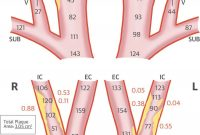 Approaching Automated Dimensional Measurement Of Atherosclerotic throughout Carotid Ultrasound Report Template