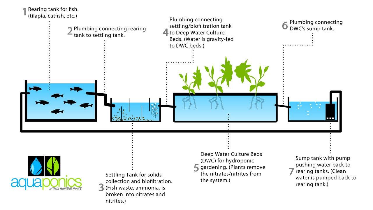 Commercial Aquaponics Business Plan Pdf  Aquaponics System Design For Aquaponics Business Plan Templates