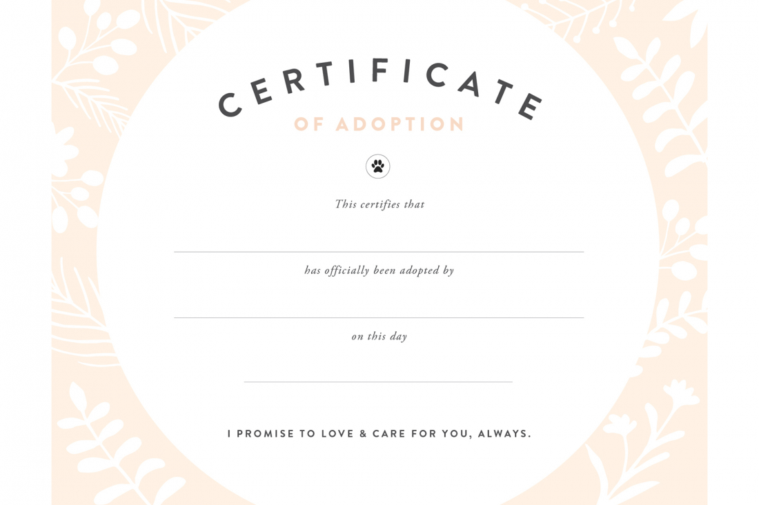 Pretty Fluffy For Pet Adoption Certificate Template