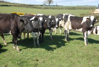 Teagasc Finalises Dairy Share Farming Agreement  Agrilandie with regard to Share Farming Agreement Template