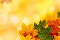 Yellow Autumn Backgrounds For Powerpoint  Nature Ppt Templates inside Free Fall Powerpoint Templates
